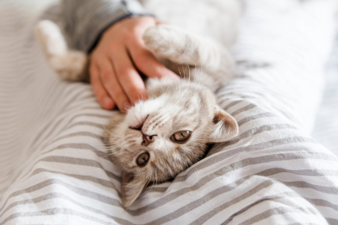 Supporting your cat's kidneys with acupressure