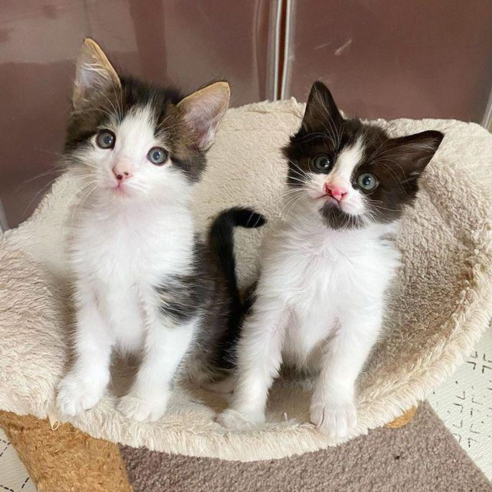 Two Kittens Find Each Other in a Special Way and Form a Wonderful Bond
