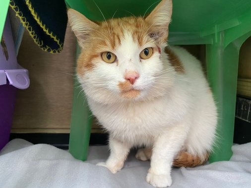 Wood Green and ProtectaPet in collaboration to support FIV+ cat wellbeing