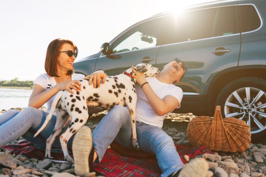 7 dog-friendly summer activities