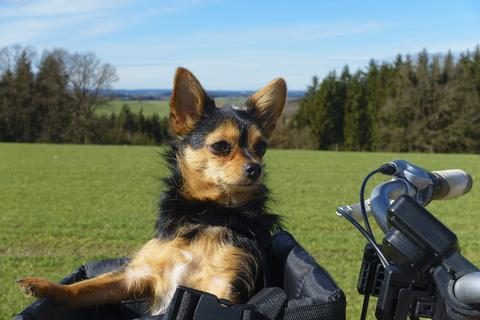 Can You Ride A Bike With Your Dog?