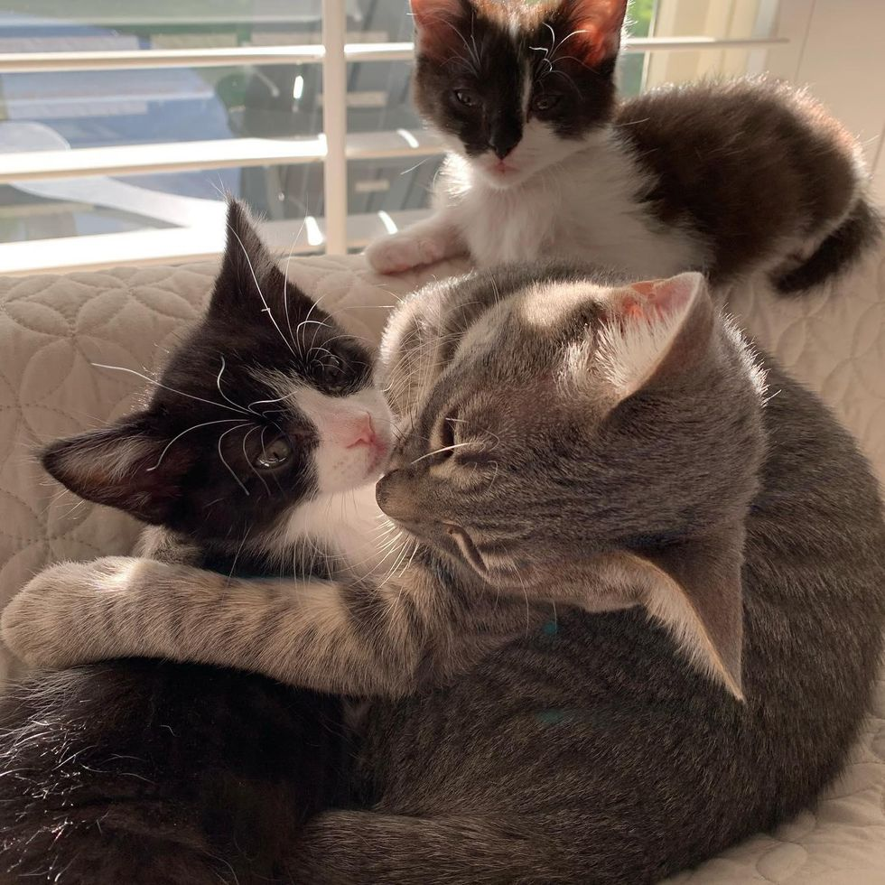 Cat Befriends Every Kitten He Meets After His Life Was Turned Around