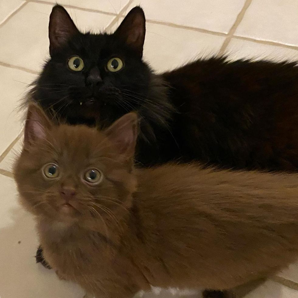Cat Blossoms After Family Opened Their Door to Her and Her Adorable Brown Kittens