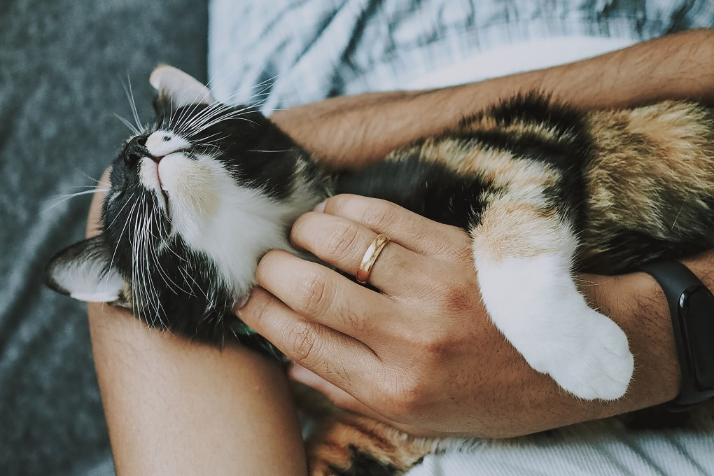 Cat Fight or Feline the Love? New Research Analyses the Relationship Between Cats and Their Owners