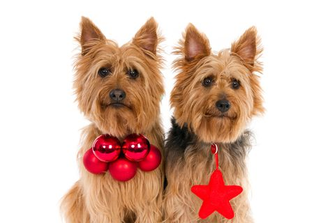 Dog Cloning: Would You Clone Your Dog?