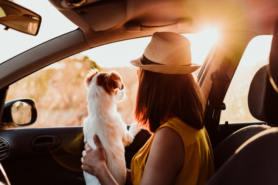 How to get out and about with your dog safely this summer