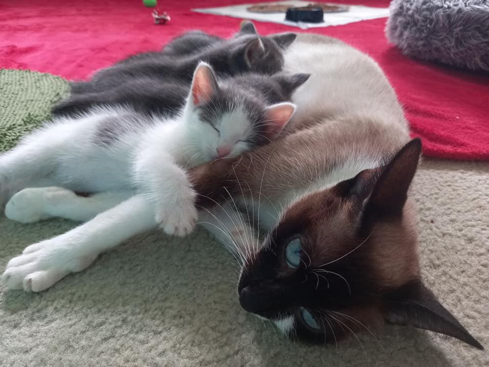 Kitten On His Own Until Cat Takes Him in and Makes Him Part of the Family