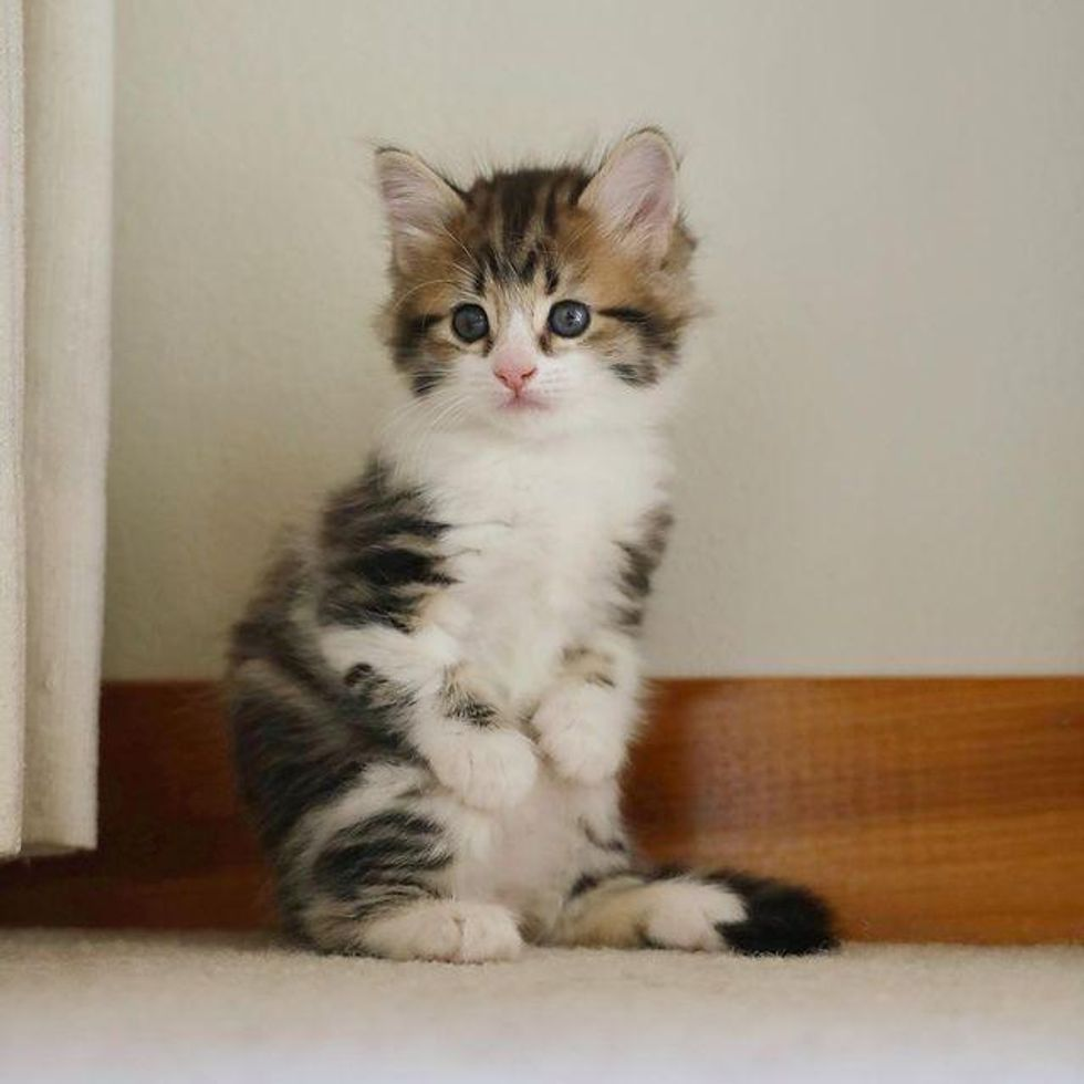 Kitten Stands Like a Kangaroo, Determined to Thrive and Live Best Life
