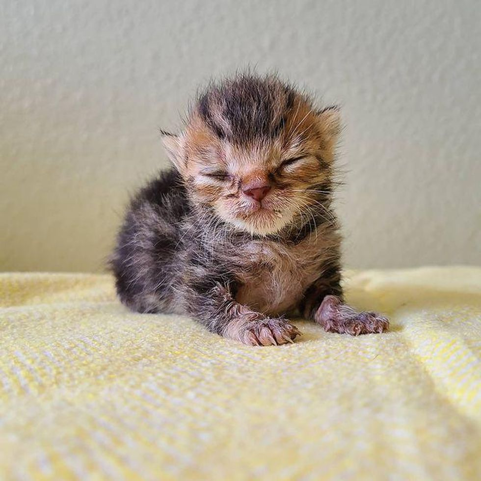 Kitten with 3 Paws and Strong Mind Rebounds from the Brink and Shows Everyone What He Can Do