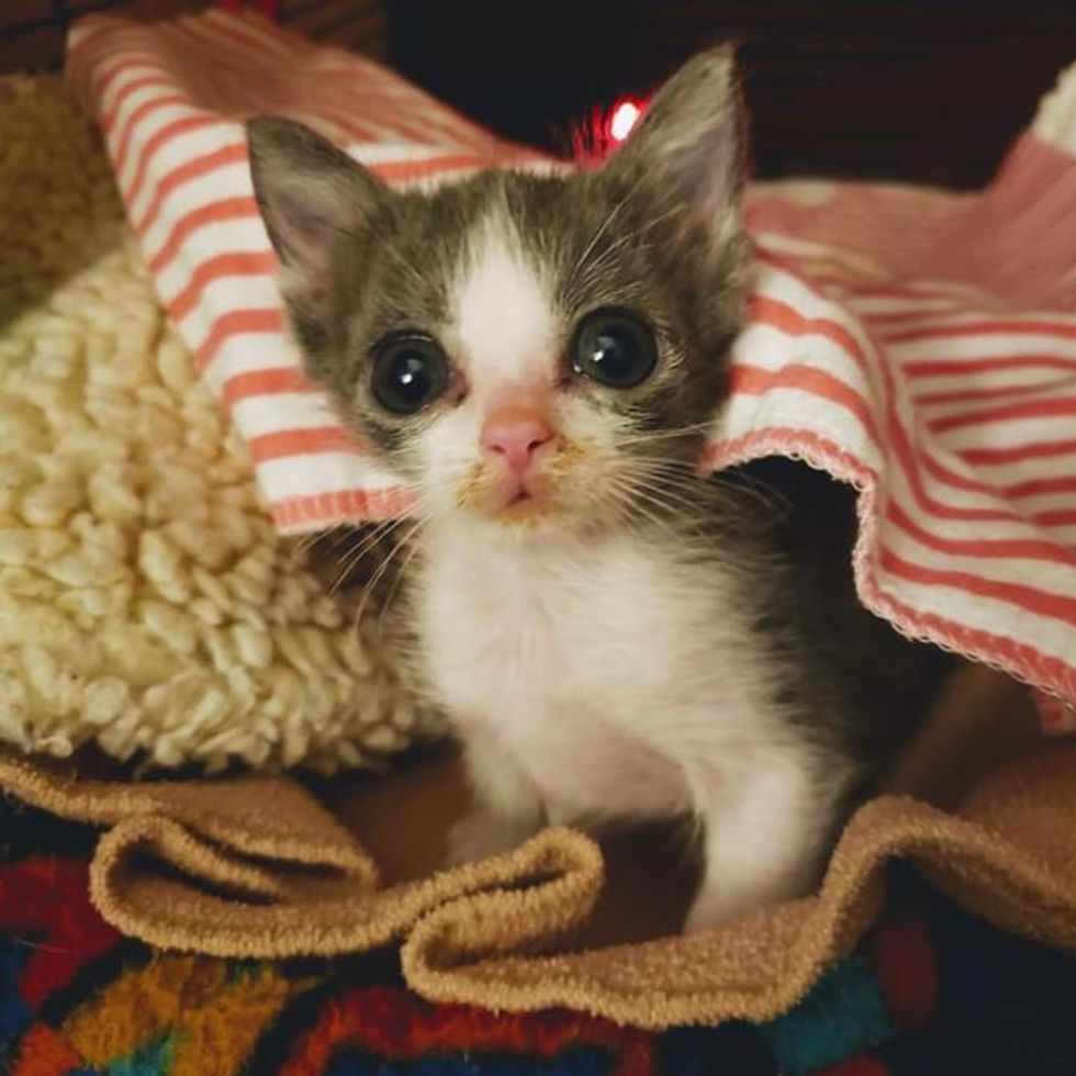 Kitten with 'Funnel Chest' is Half the Size But Has Brave Endearing Personality