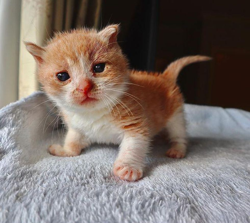 Kitten with Incredible Resilience is Determined to Live Full Life with the Help of a Kind Couple