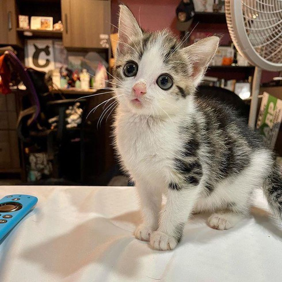 Kitten with Mesmerizing Face Jumps with Joy After Leaving the Street Life Behind