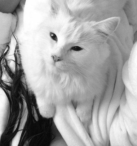 Purrsday Poetry: Cats by Eleanor Farjeon