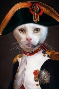 Purrsday Poetry: The Empurror Rules: A Catatonia Poem