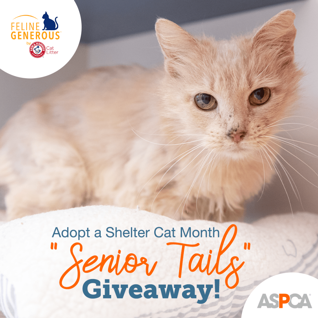 """The ASPCA and ARM & HAMMER Feline Generous Host """"Senior Tails"""" Giveaway"""