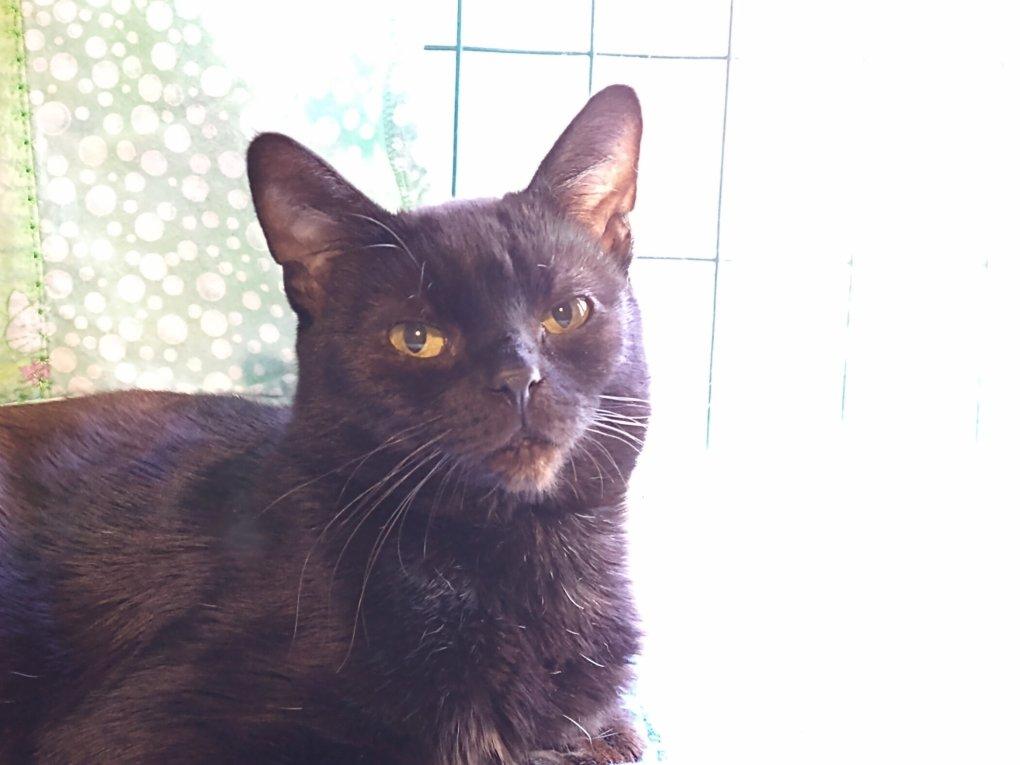 The Story of Odin, The Lucky Unlucky Black Cat