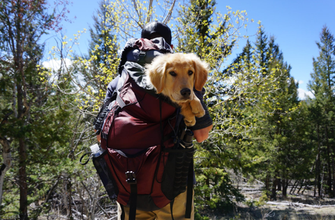 Ultimate Guide On Choosing The Best Dog Carrier