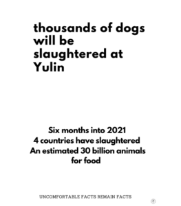 Why are we Outraged at the Yulin Dog Meat Festival?