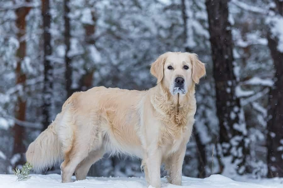 265+ Winter Dog Names – Creative Name Ideas for Your Pup