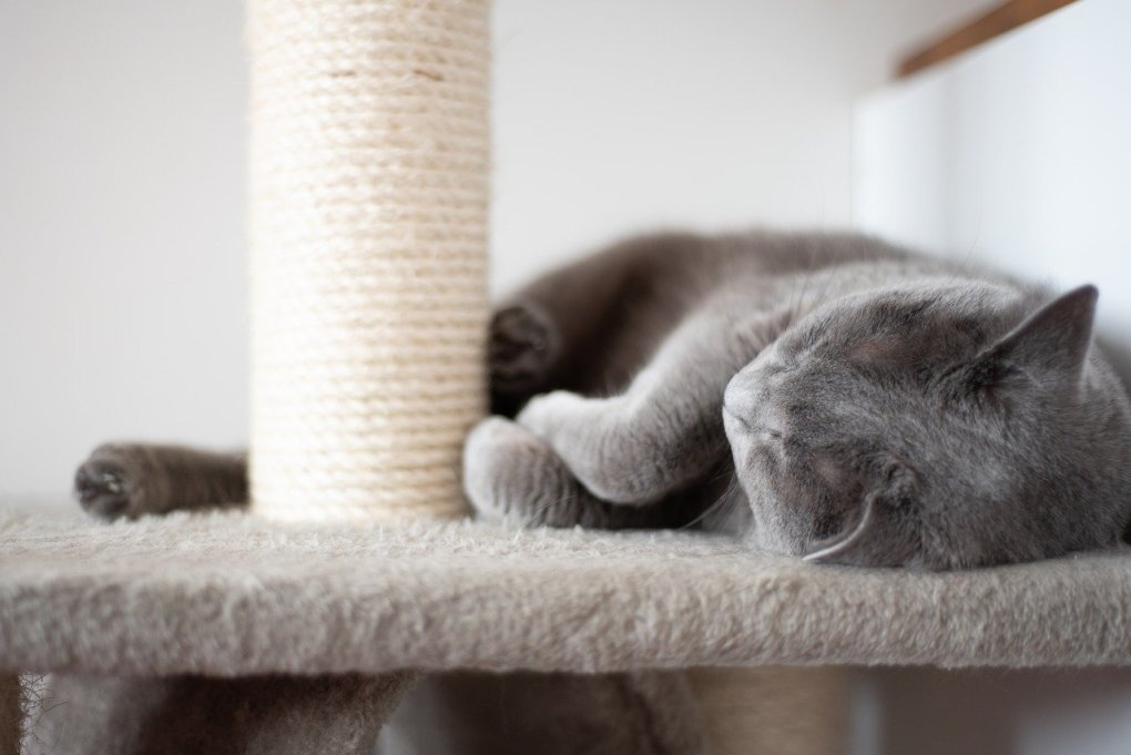 Best Exercise Ideas For Your Indoor Cat