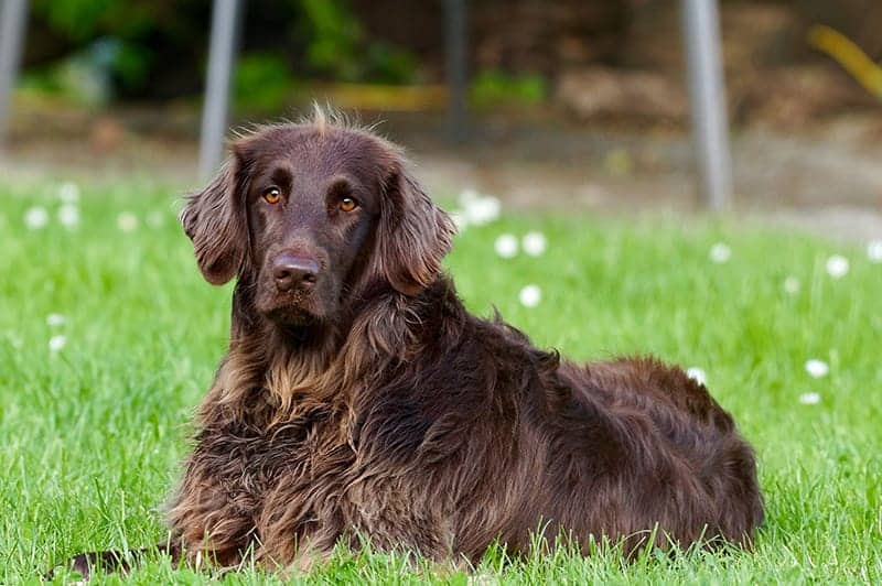 Brown Dog Names You'll Love – 405+ Incredible Ideas!
