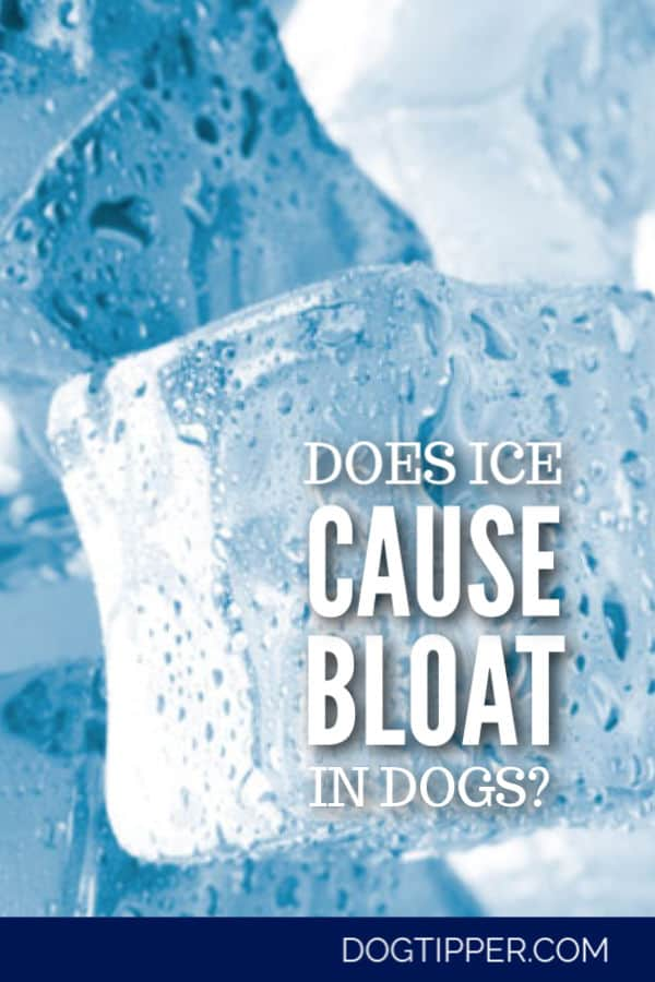 Can I Give My Dog Ice or Ice Water?