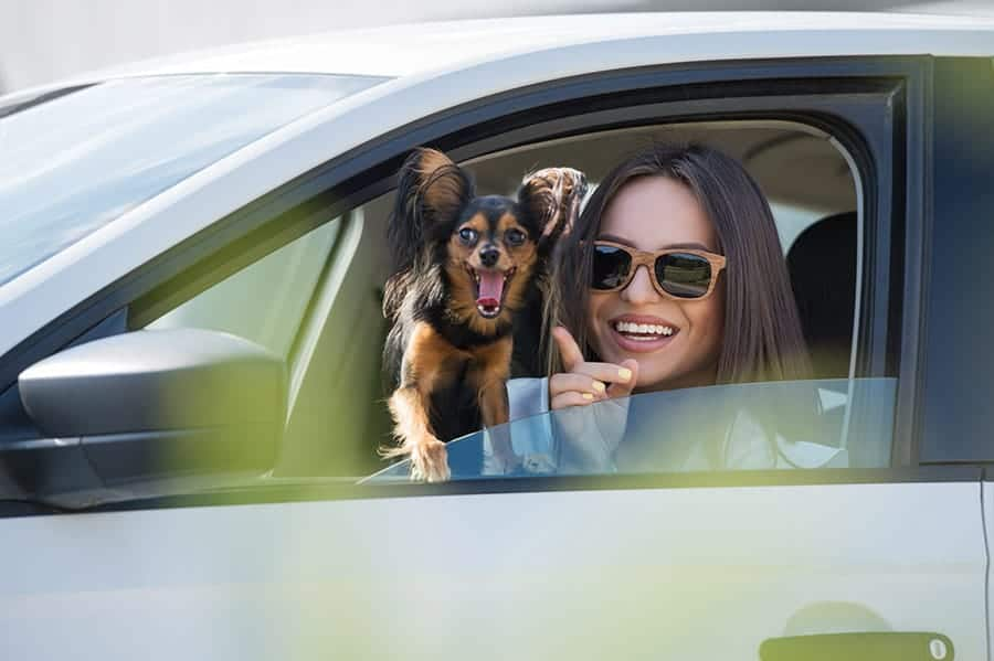 Car Names for Dogs