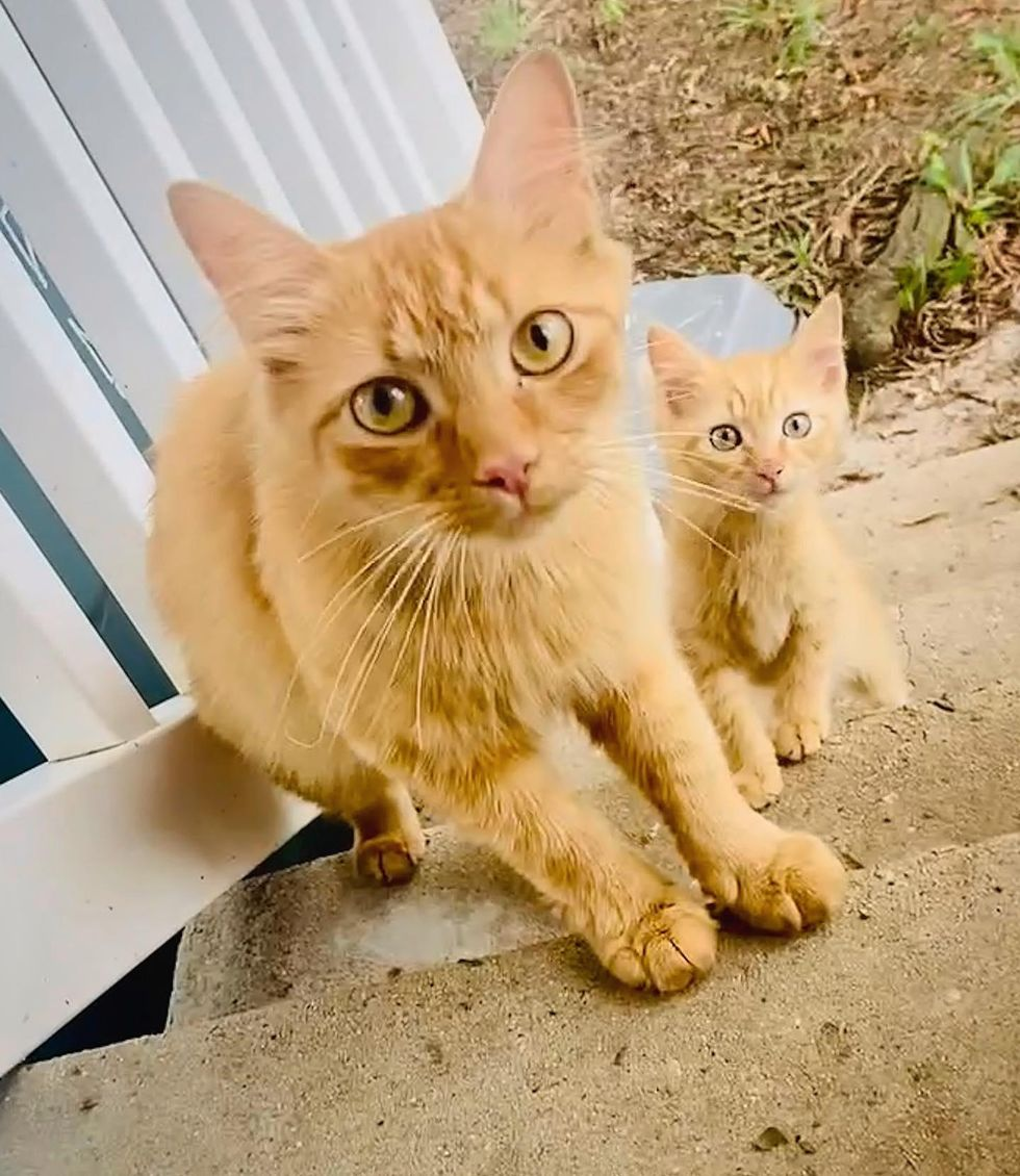 Cat Brings Kitten to Family She Trusts and Comes Back Next Day with Another One