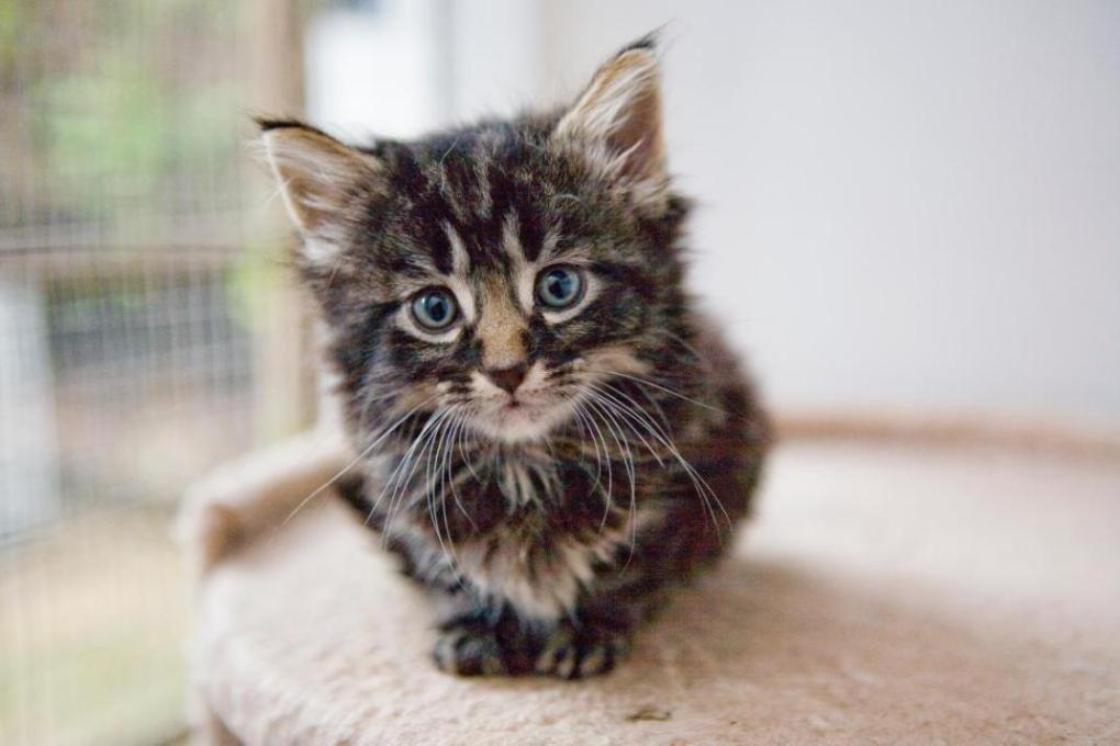 Cat Rescue Centers to Win Donation