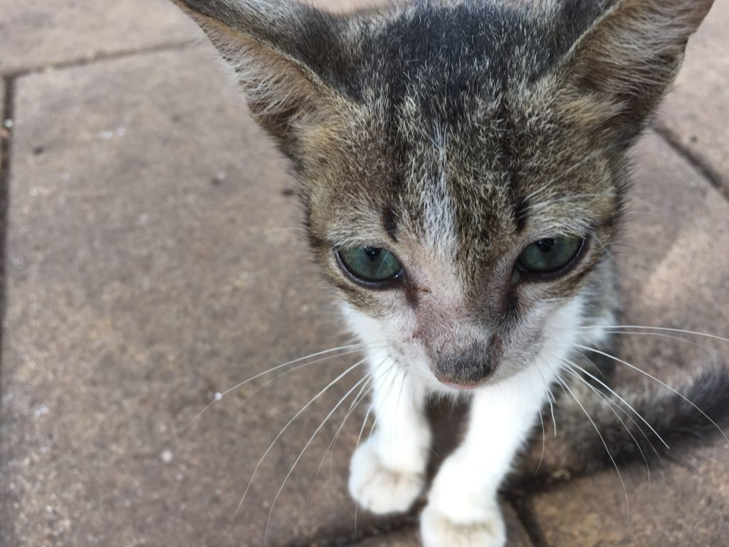 Cats and Anxiety- what are the signs?