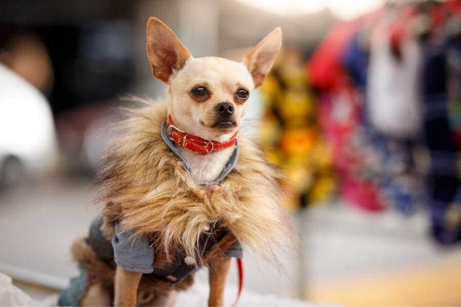 Designer Dog Names – 215+ Incredible Ideas
