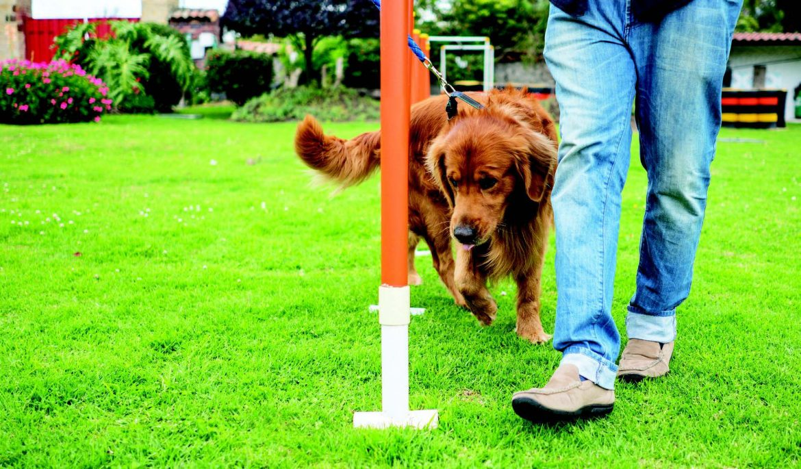Dog Sports to Help Build Your Bond