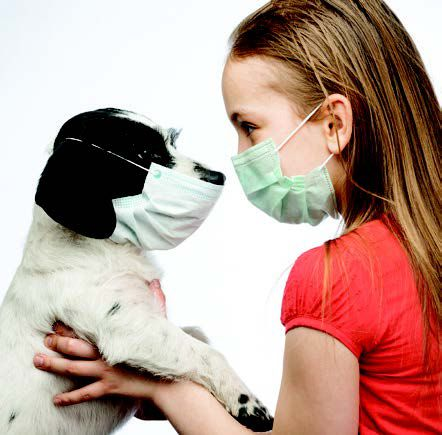 Dog's Size and Shape May Predict Bone Tumor Risk