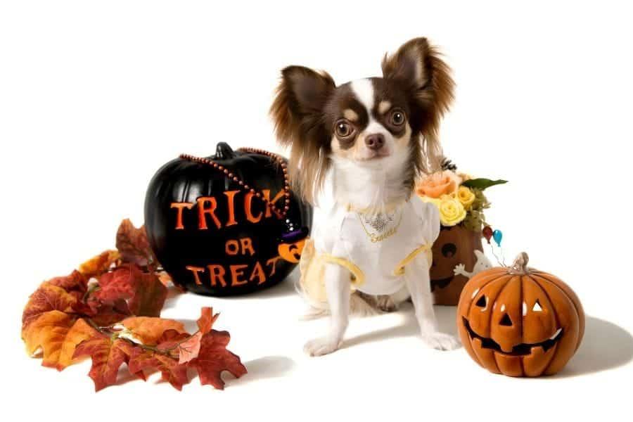 Halloween Dog Names – 275+ Amazing Ideas
