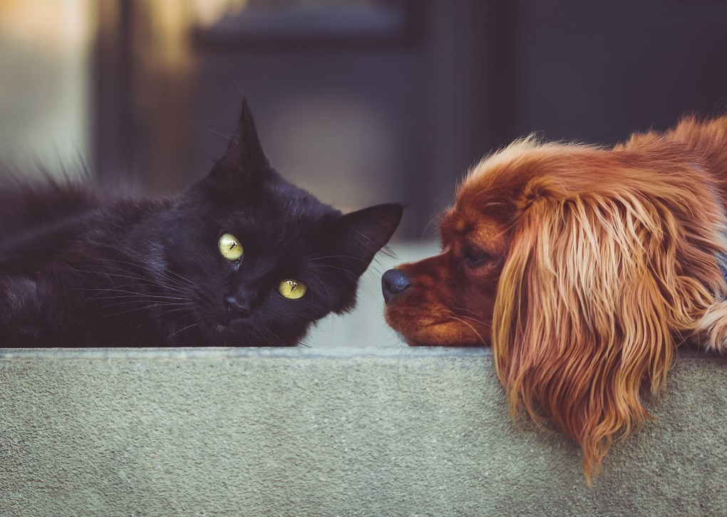 Have Cats Become More Affectionate in Lockdown? New Research Shows the Impact of the Pandemic on Pets