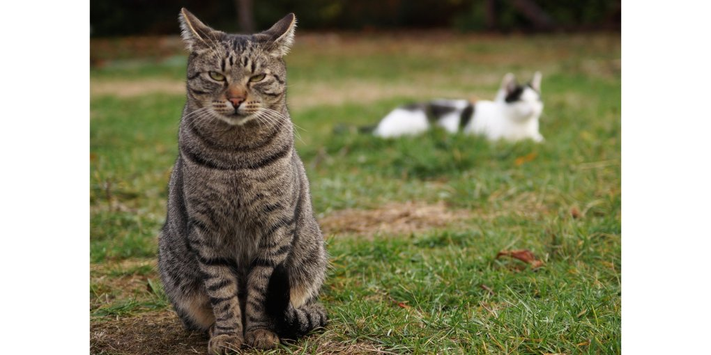 Indoors or Outdoors? International Owner Demographics and Decisions on the Lifestyle of Pet Cats