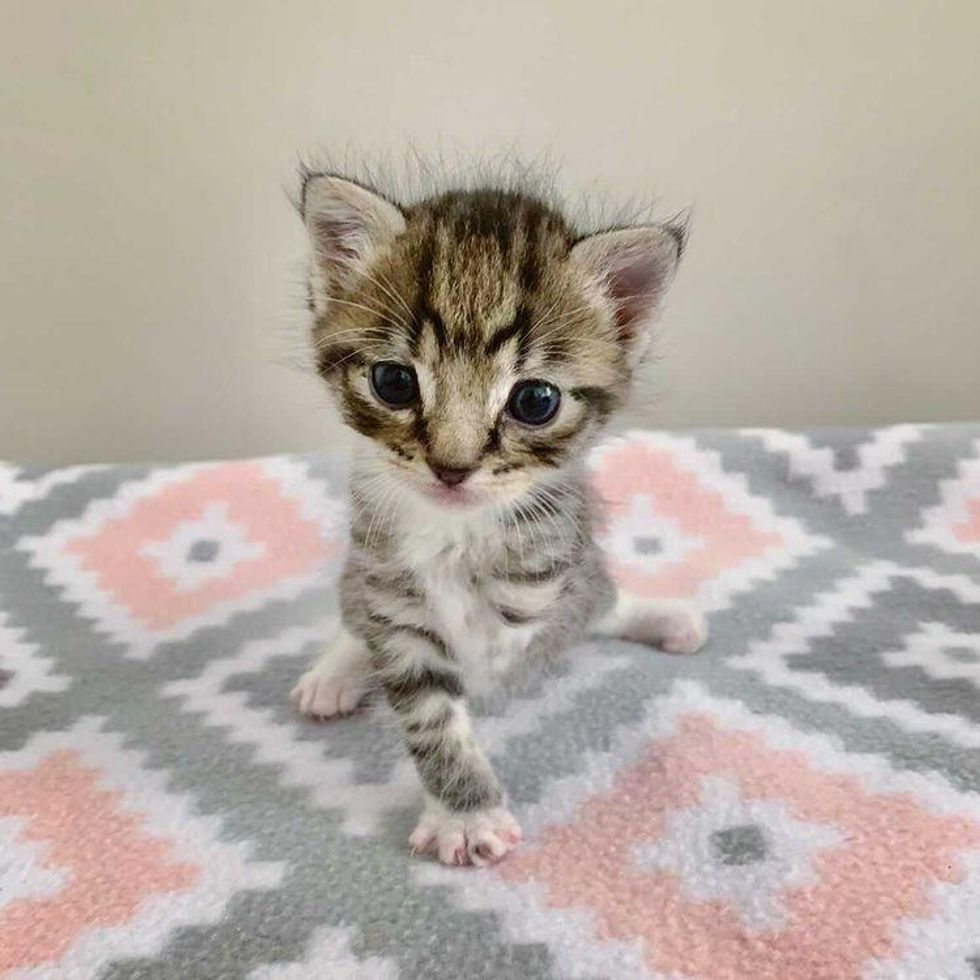 Kitten Missing a Leg Shows Everyone What He Can Do with the Help of Kind Family