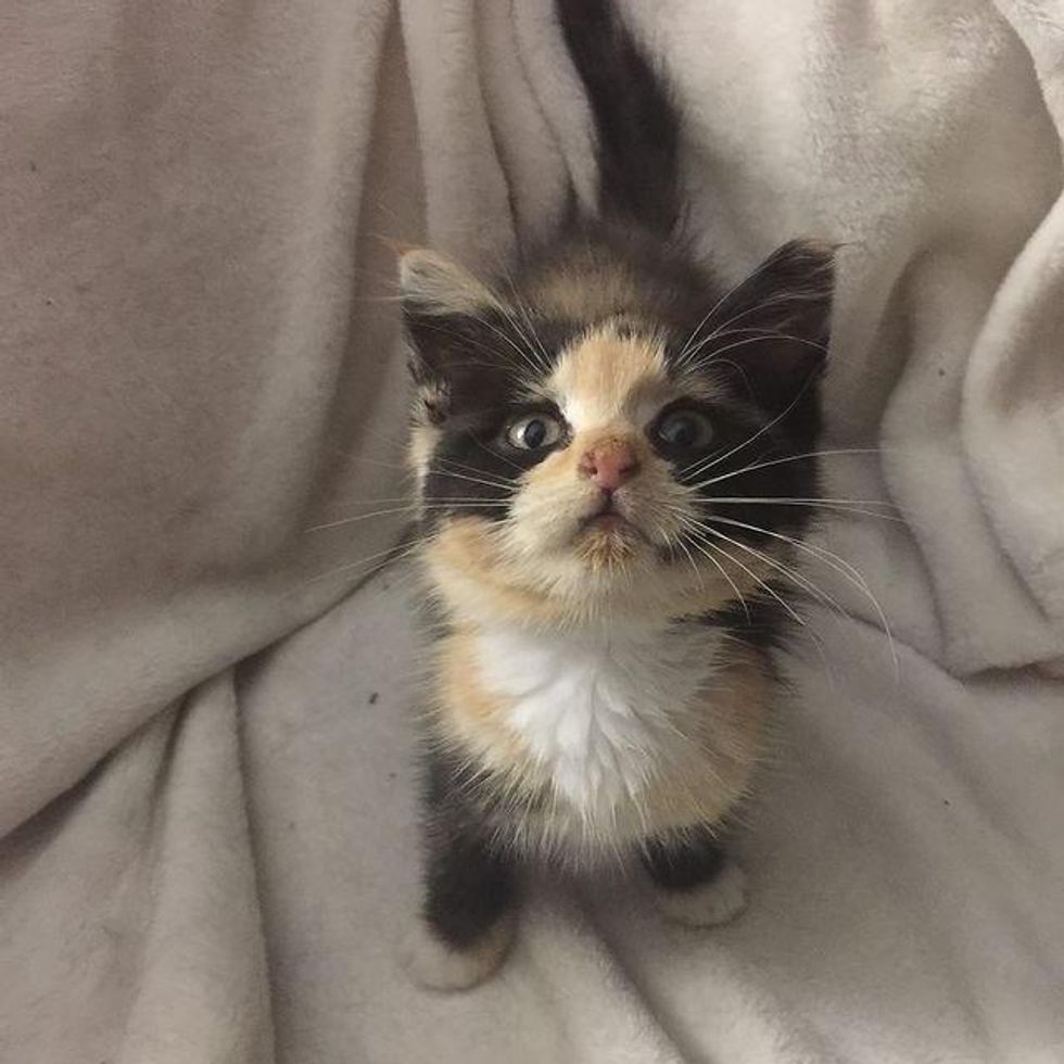 Kitten So Happy to Have Warm Lap to Sit on After Being Found in Recycling Bin Looking for Food
