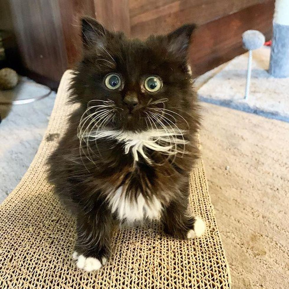 Kitten with Irresistible Eyes Has Her Life Turned Around When She Finds Woman to Help Her