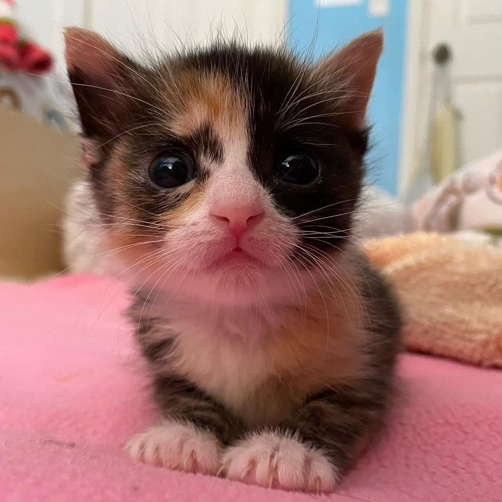 Kitten with Wondrous Eyes So Happy to Be Cared for, She Turns into a Purr Machine