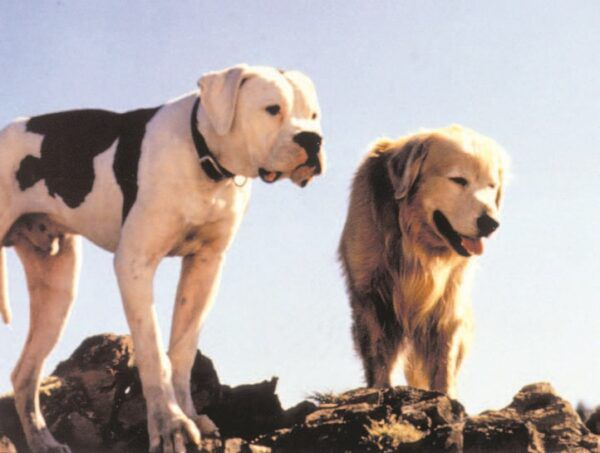 Movies Your Dog Wants to Watch Now