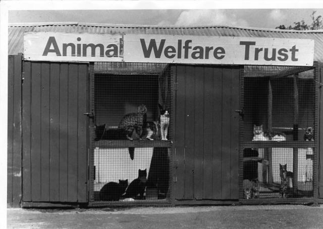 National Animal Welfare Trust Celebrates 50th Anniversary
