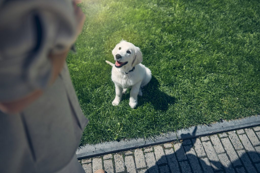Positive Reinforcement: The Scientifically-Backed Way to Successfully Train Your Dog