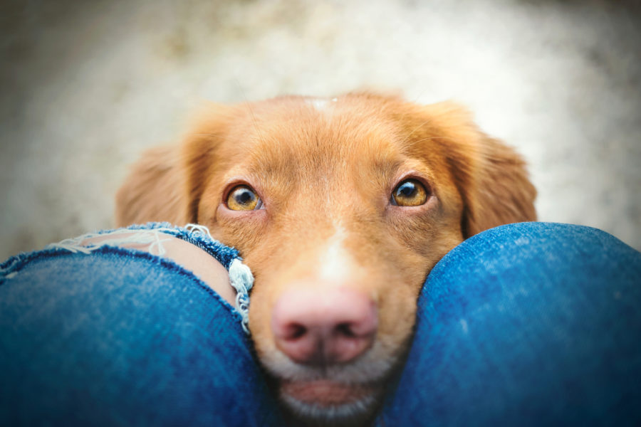 Protect your dog or cat's vision with checkups and antioxidant support
