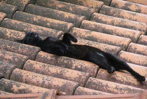 Purrsday Poetry: The Bliss of Old Tile Roofs, or Words to the Wise