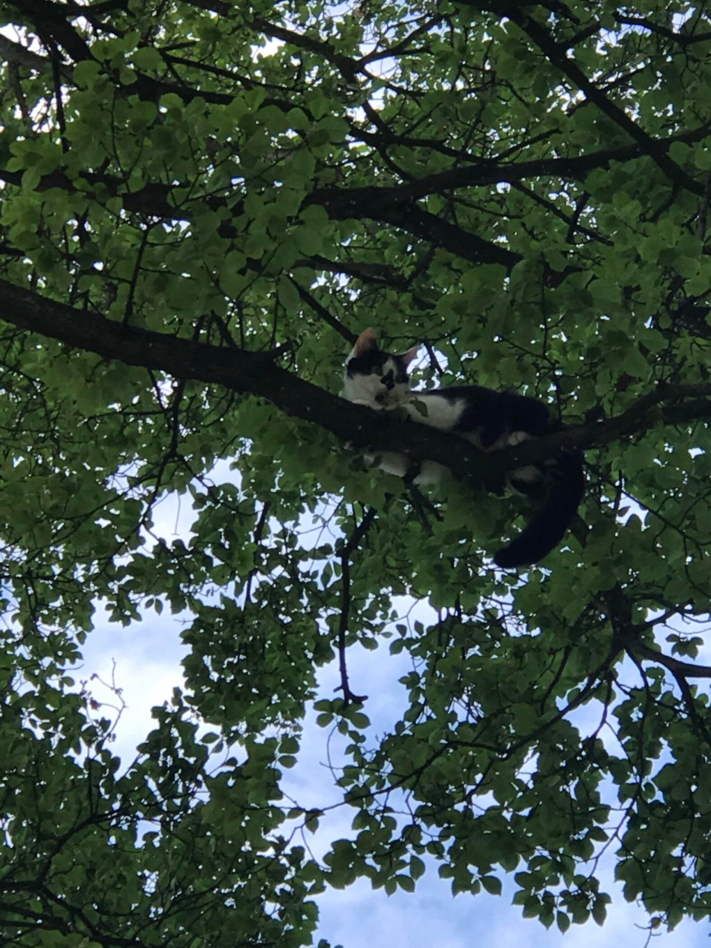 RSPCA and Fire Services Rescue a Young cat Stuck 25ft up a Tree in Sussex