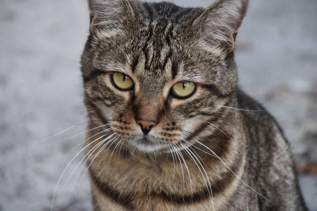 RSPCA Appeals for Information After Cat Dies From Suspected Poisoning