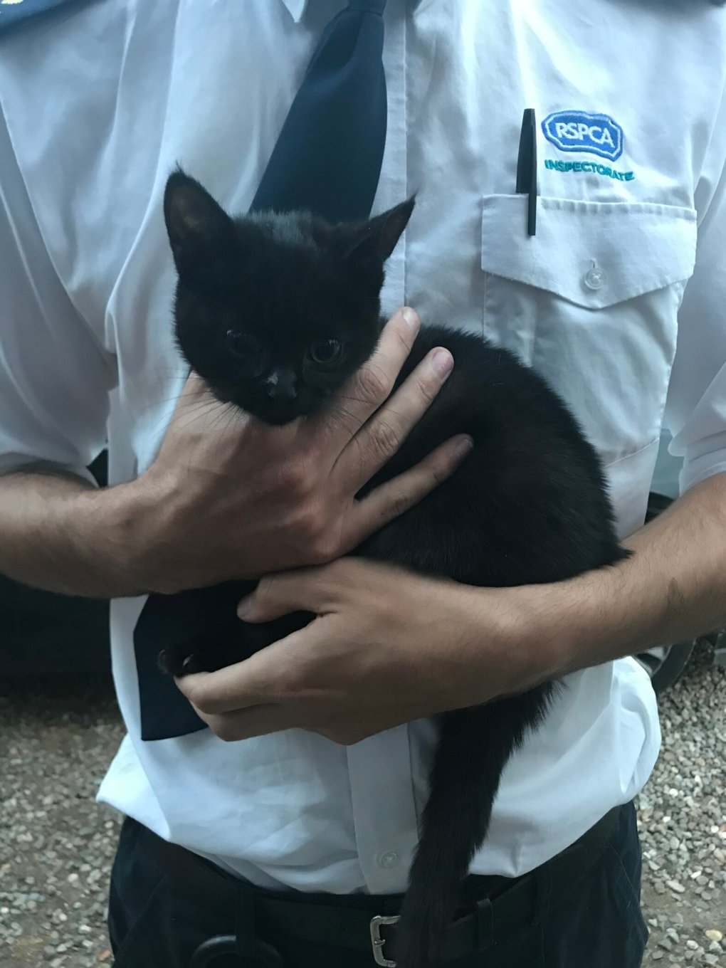 RSPCA Appeals for Information After Kitten With Suspected Concussion is Found Abandoned in Backpack