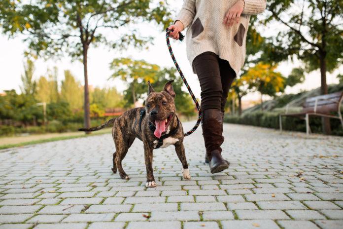 The art of dog walking
