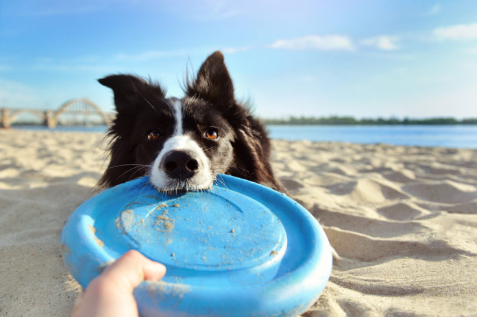 Top tips for safe summer outings with your dog